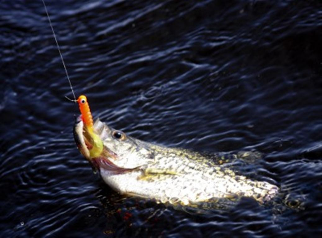Fall crappies how to catch crappie how to fish crappie for Crappie fishing bait