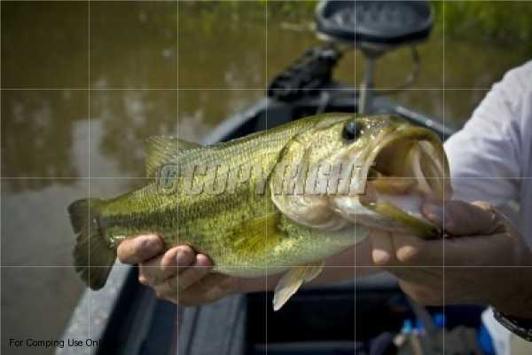 How to catch fish how to catch bass how to fly fish part 9 for How to catch bass fish
