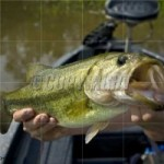 How To Catch Bass In The Milfoil (part 1 the basics)